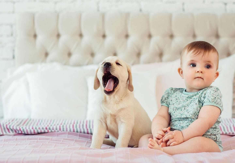 【獣医師監修】犬と赤ちゃんの同居で気をつけることとは?トラブルや事故を防止するための注意点などを解説