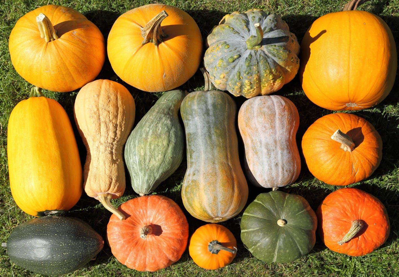 数種類のかぼちゃ