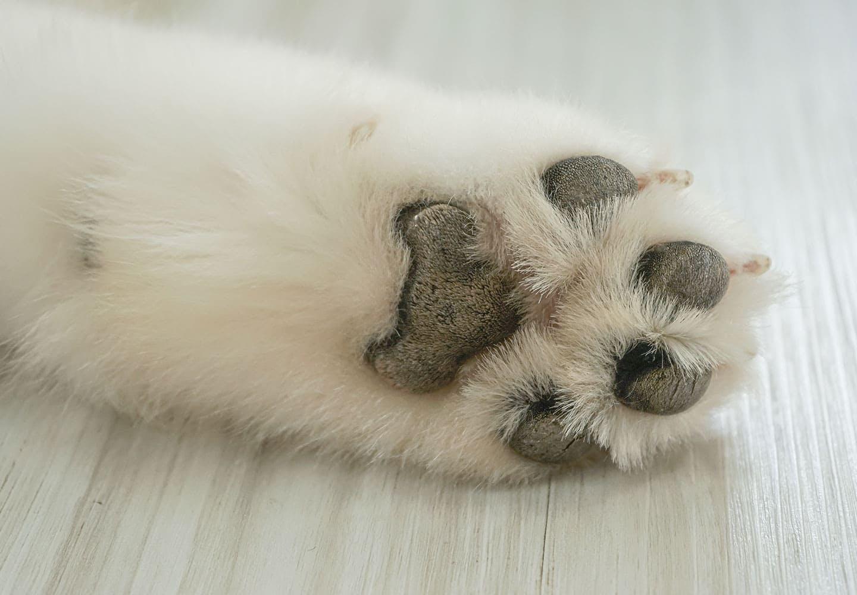 【獣医師監修】犬の肉球の役割とは?体調不良のサインや病気・怪我の対処法、ケアの仕方などを解説