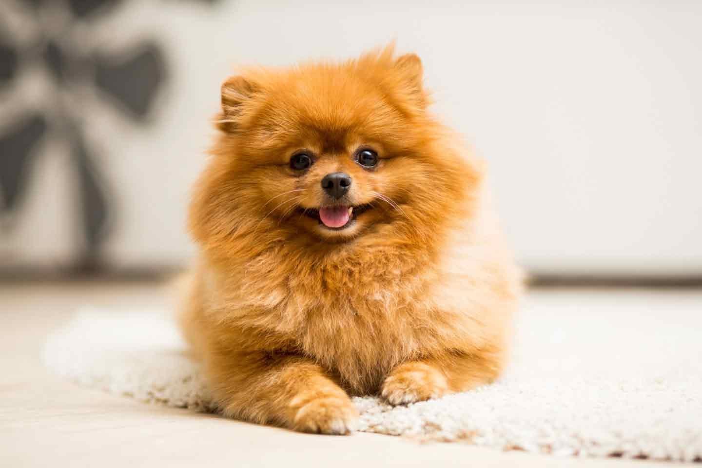 """必ず守ろう!環境省が法律に基いて定める""""犬の飼い方の基準""""とは"""