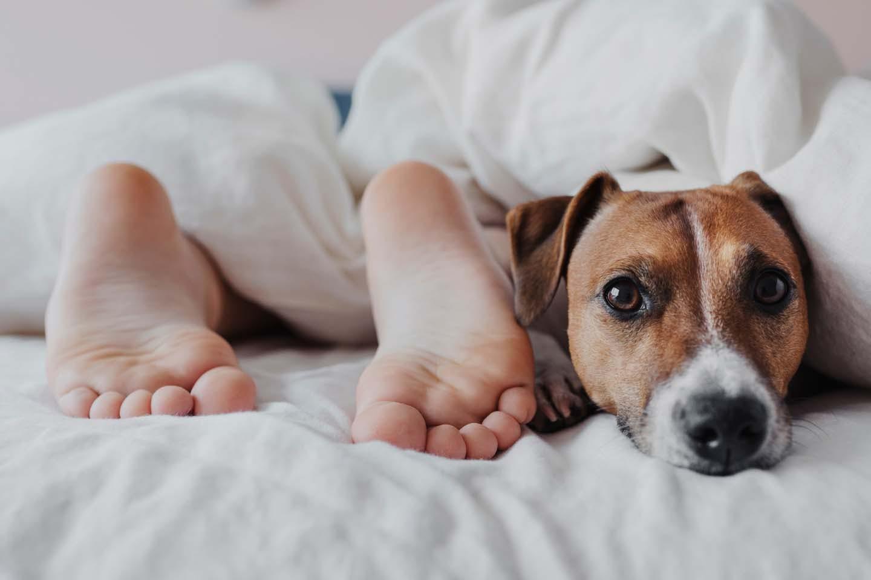 寝ている人の足の横にいる犬