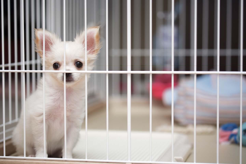 ケージに入った子犬