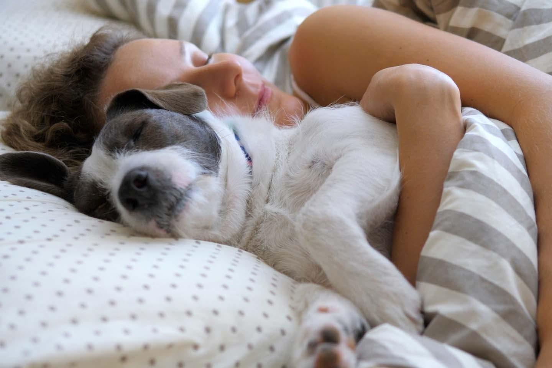 犬と一緒に寝る時に気をつけることは?メリット・デメリットや必要なしつけなどを解説【獣医師監修】
