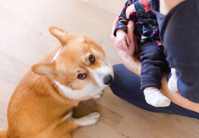 赤ちゃんを見上げる犬