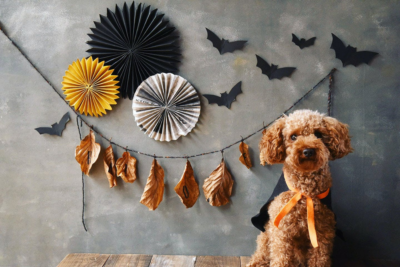 【各10分で完成】愛犬のハロウィン衣装と撮影アイテムを作ろう!