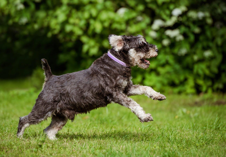 【獣医師監修】犬の寿命は何歳くらい?犬種別の平均寿命や長生きさせるための注意点などを解説