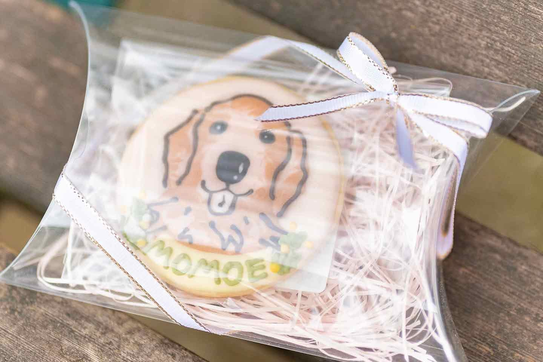 WanScene 女優高橋ひとみ ゴールデンレトリーバー 愛犬クッキー