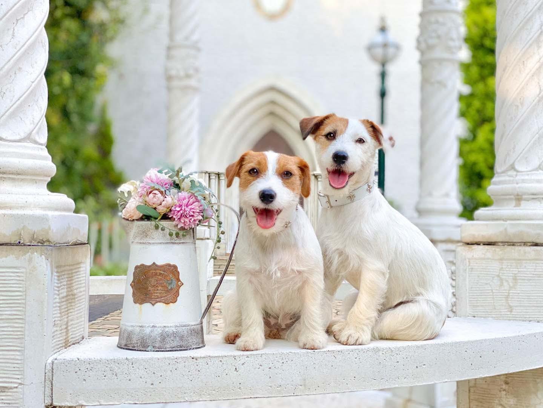 愛犬の写真をスマホで上手に撮る方法とは?フォトグラファー直伝の撮影の基本と、かわいい表情を引き出すテクを紹介します!