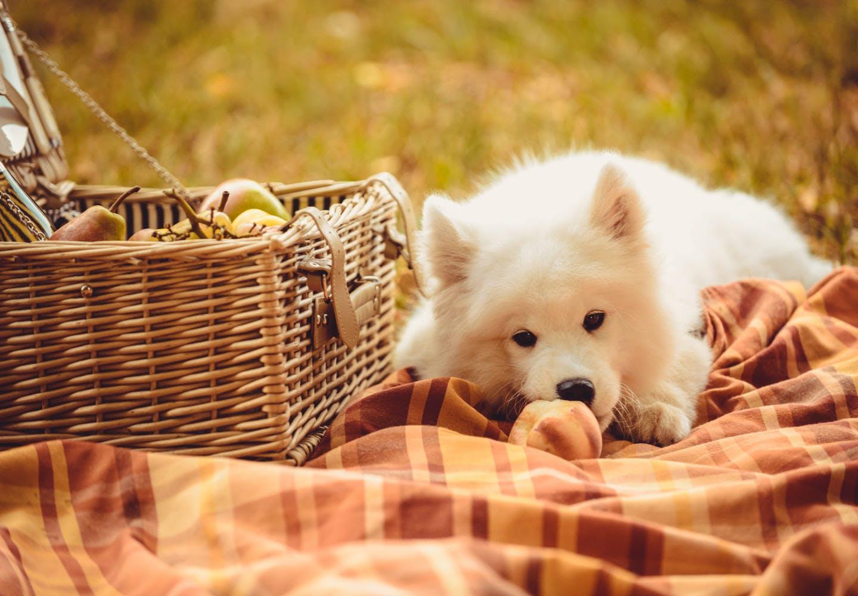 桃と寝そべる犬