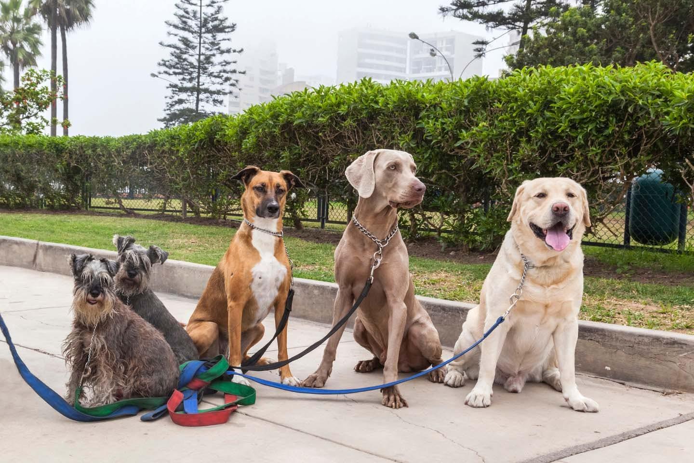 様々な犬種の犬たち