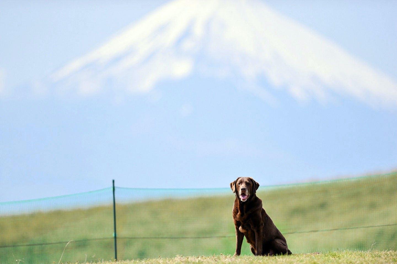 富士山を望む絶景ドッグランを走る!愛犬と行く伊豆・熱海のおすすめスポット