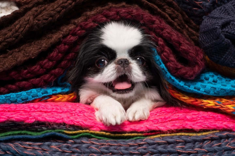 暖かいところにいる犬