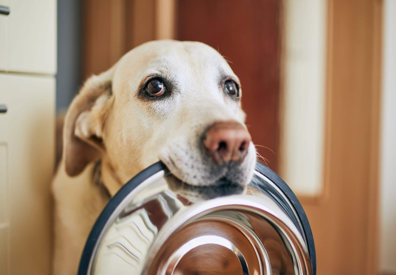犬にメロンを食べさせても大丈夫?_餌を待っている犬