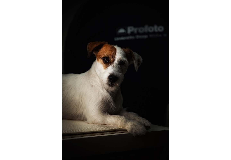 スマホで撮った意味のある視線の犬写真