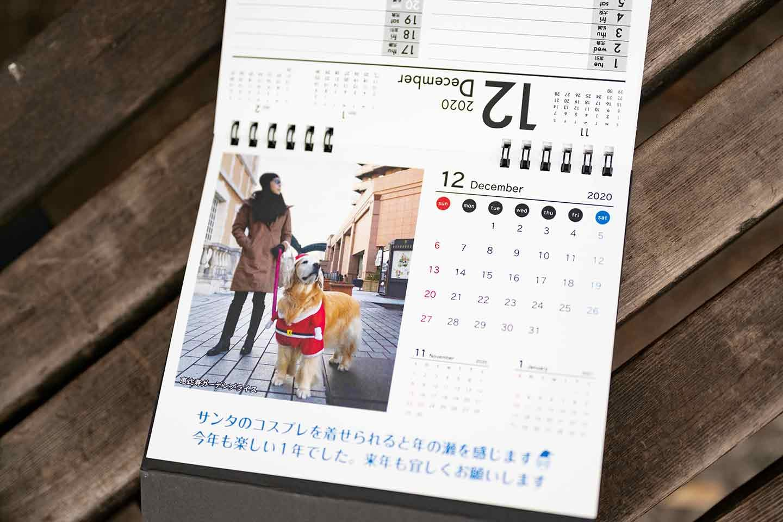 WanScene 女優高橋ひとみ ゴールデンレトリーバー 愛犬カレンダー