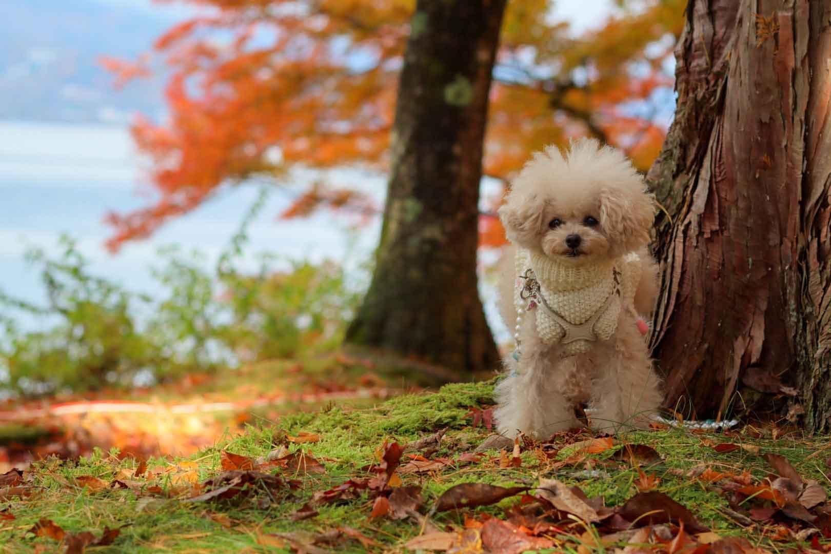 【山中湖】愛犬と海外旅行気分が味わえる観光スポットを紹介♪