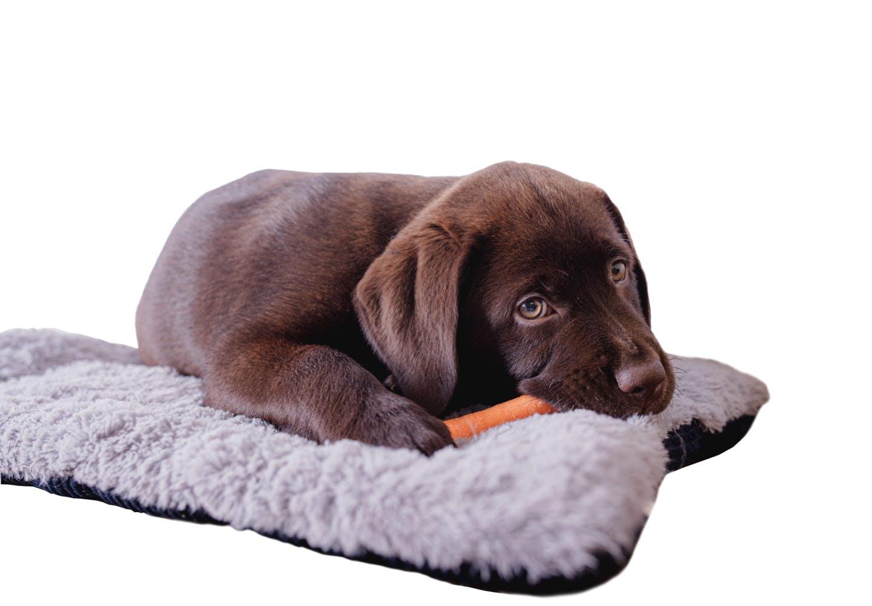 にんじんと寝そべる犬