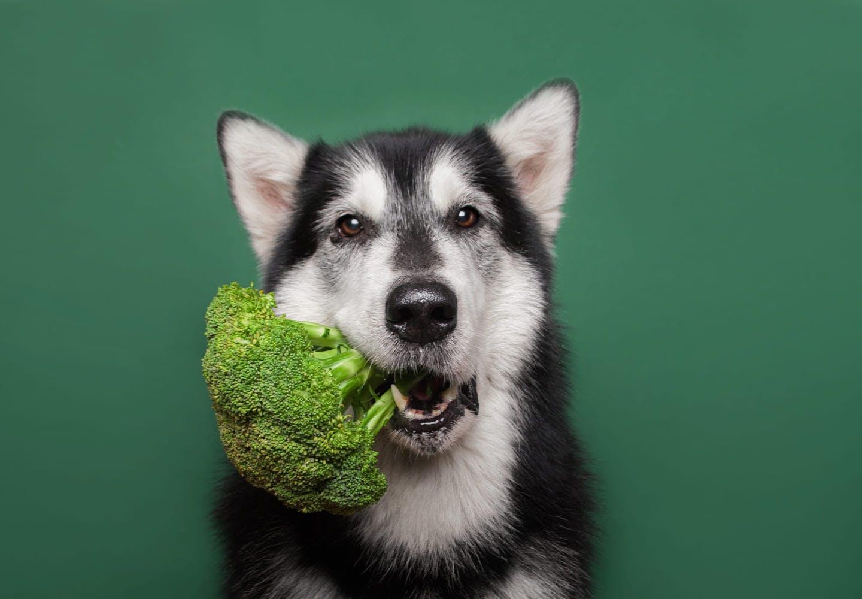 ブロッコリーをくわえる犬