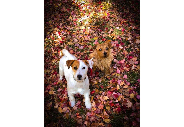 犬の目線をもらってスマホで撮影した犬の写真