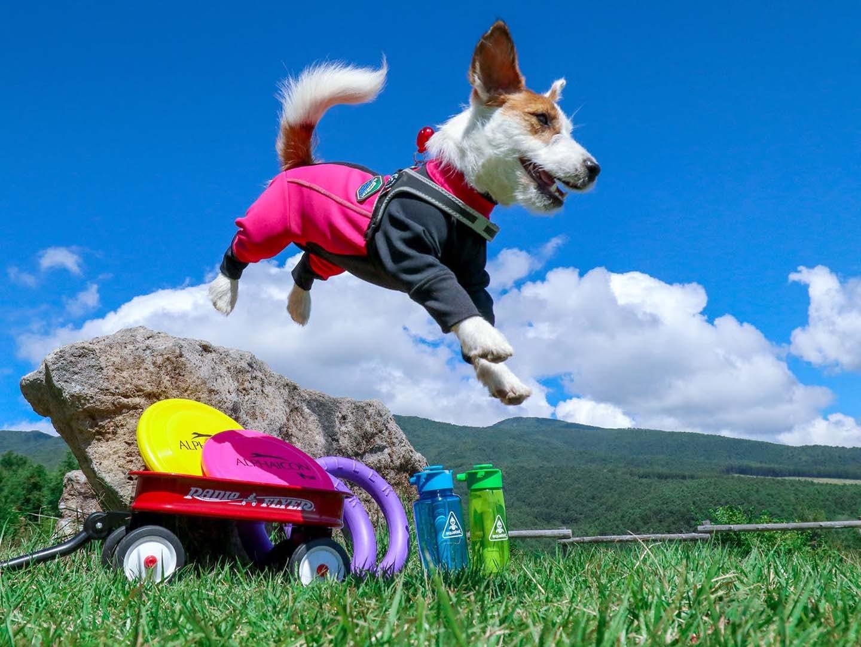 スマホのフォーカスロックと連写で撮影した犬の写真