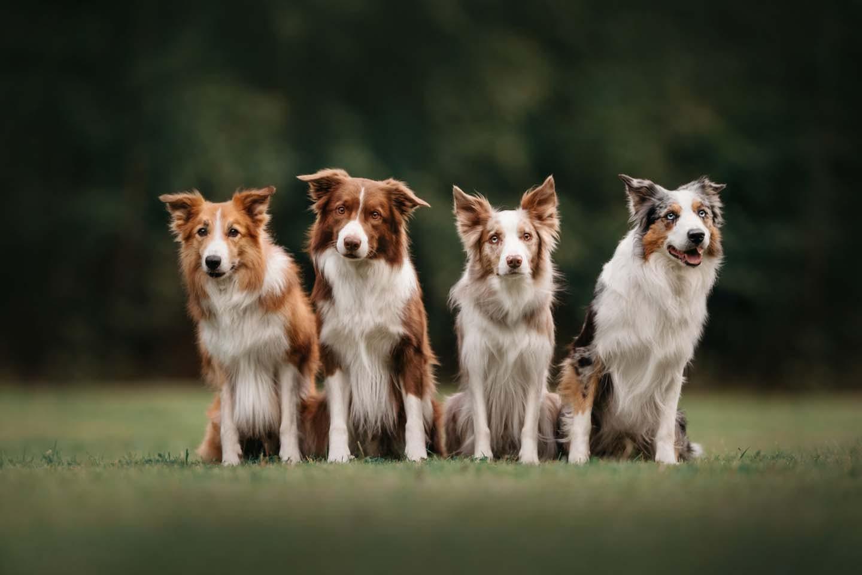 同じ犬種の犬たち