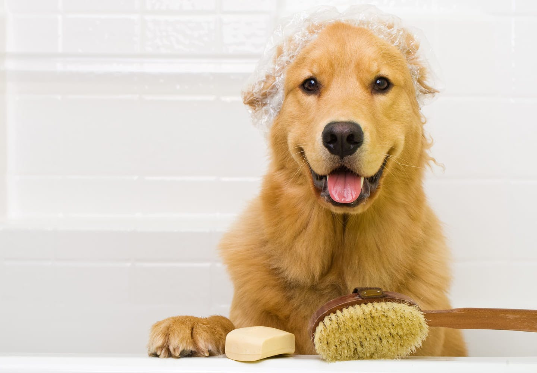 犬をお風呂に入れる頻度は?適温や注意点、嫌がる時の対処法を解説【獣医師監修】