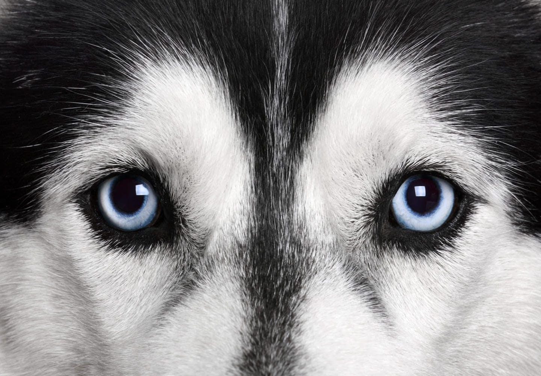 犬の涙やけの原因って_犬の目