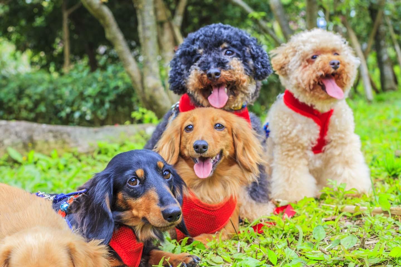 【獣医師監修】犬の性格はいつ決まるの?犬種ごとの特徴や犬の性格を決める要因を解説