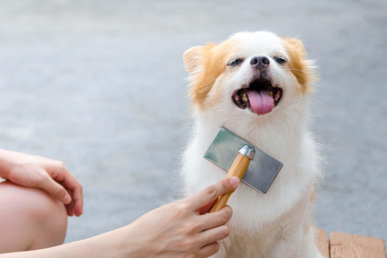 ブラッシングされる犬