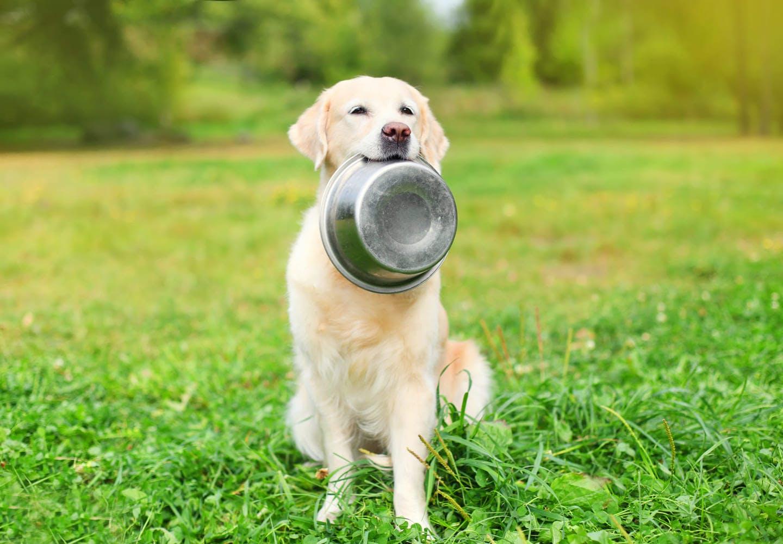 器を咥えながら待つ犬