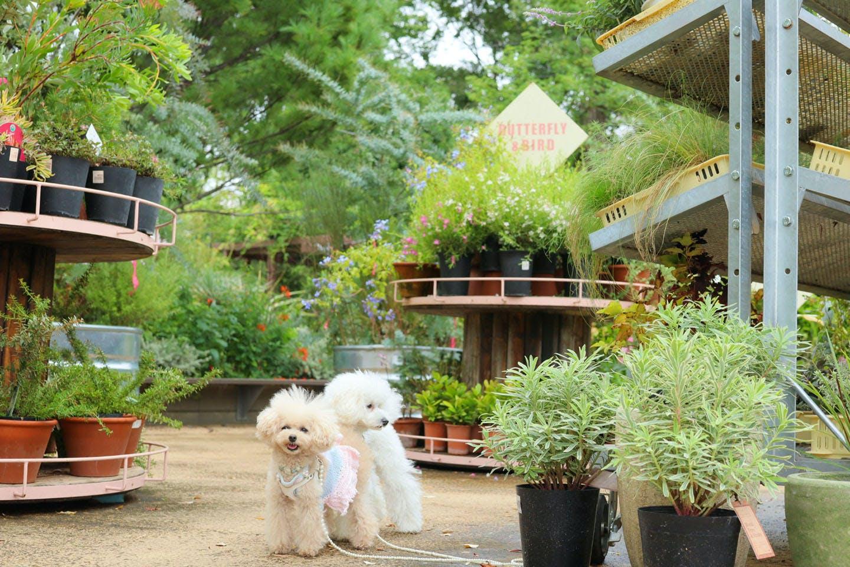植物がたくさんの場所