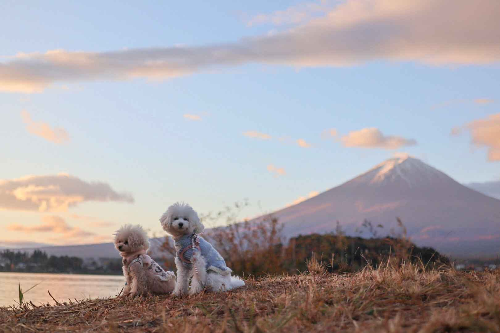 【河口湖・西湖】秋の犬連れ観光プラン!店内OKのランチも♪