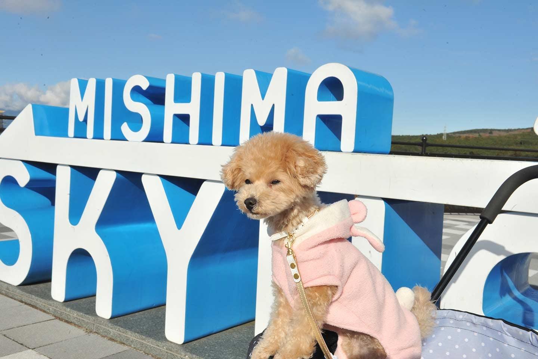 【会員特典あり】箱根で広大なパノラマを満喫&愛犬家こだわりの宿にお泊りしよう!
