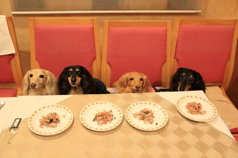 レストランでテーブル席に並ぶわんちゃんたち
