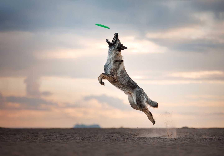 愛犬との絆が深まるドッグスポーツとは?メリットや代表的な4種類の競技について解説