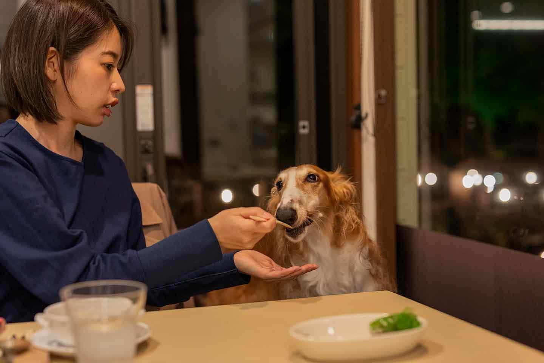 那須フォレストヒルズ 体験レポート レストランマヨール 犬とディナー