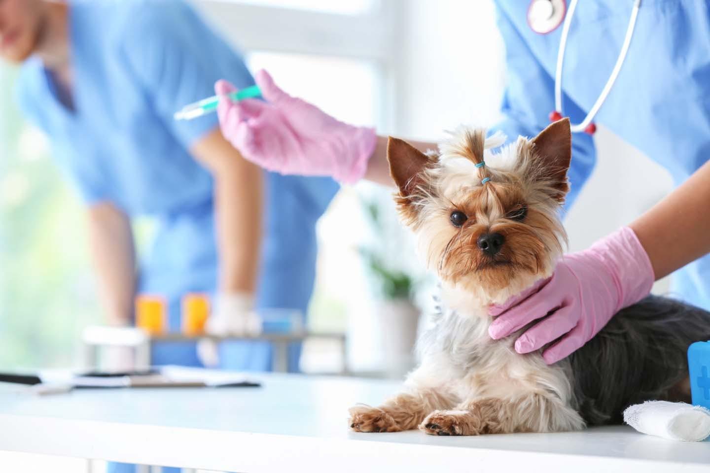 愛犬のためにペット保険は入るべき?メリット・デメリットや選び方のコツ、補償範囲や加入時の注意点について解説