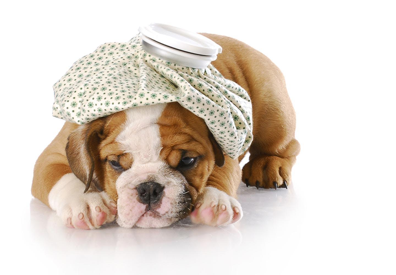 【獣医師監修】犬の平熱は何度?上手に体温を測る方法や低体温・高熱のときの対処法などについて解説