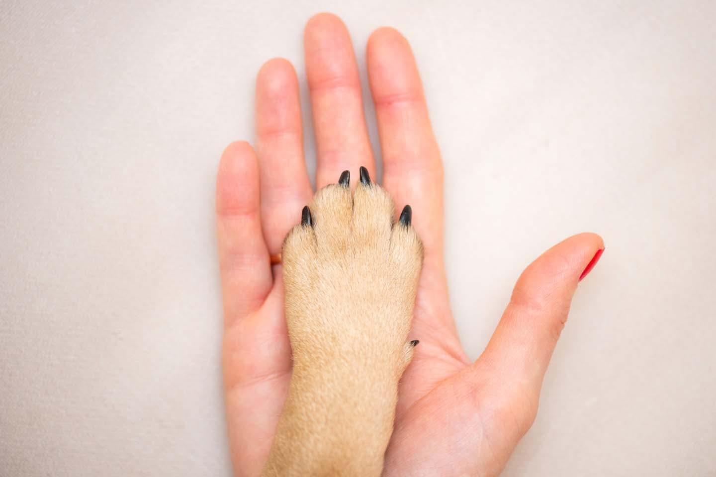 人と犬の手