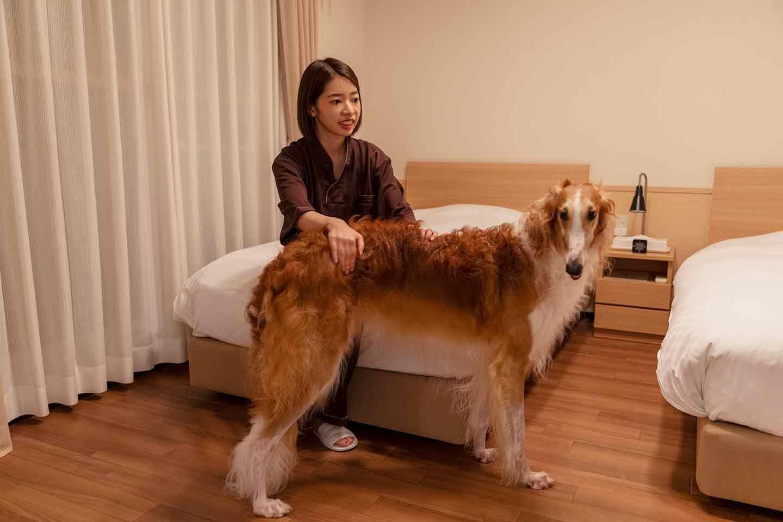 那須フォレストヒルズ 体験レポート 犬と部屋でくつろぐ