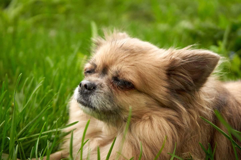 目を瞑った犬