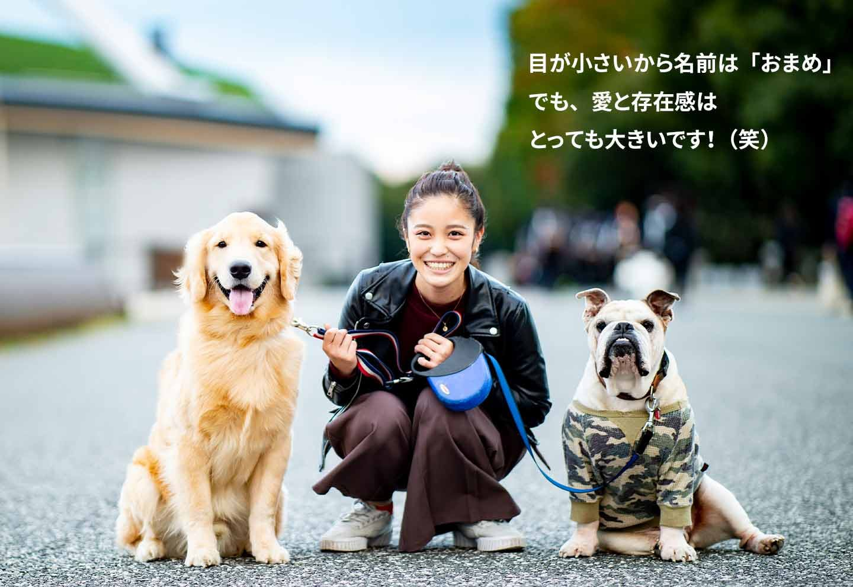 愛犬家の一日《WanScene106》由井さん&おまめ(ゴールデンレトリバー )