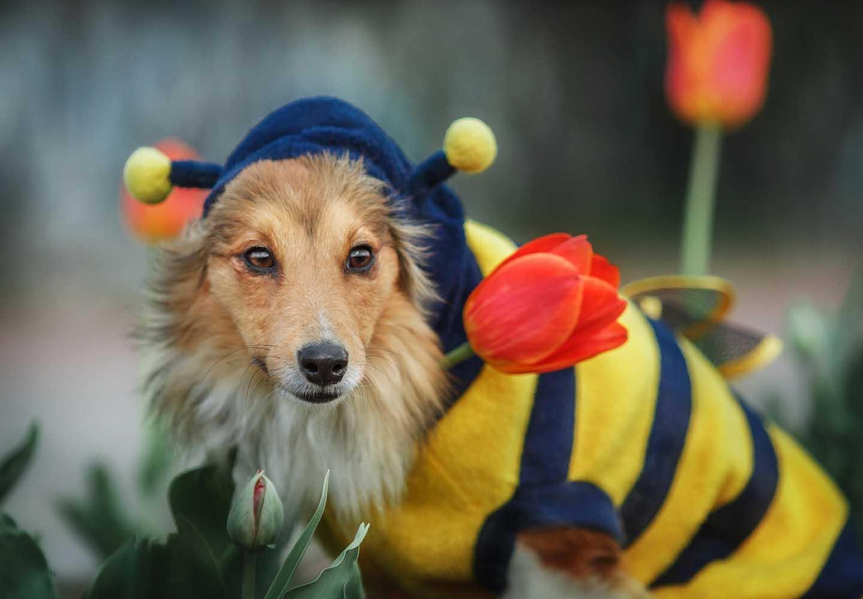 犬にはちみつを食べさせても大丈夫?メリットやおすすめの与え方、ボツリヌス菌やアレルギーなどへの注意点について解説
