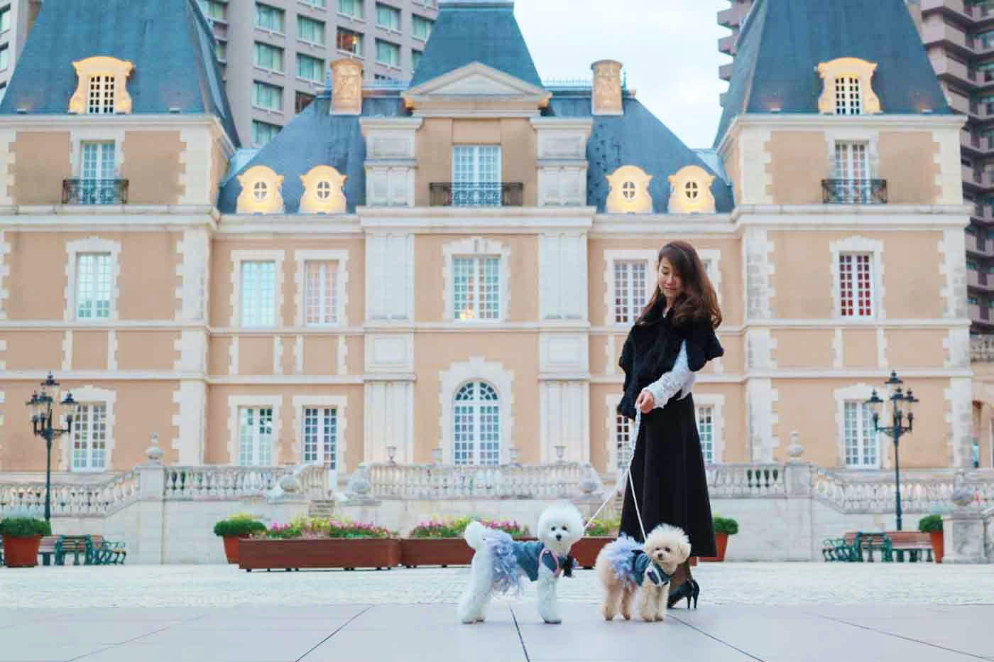 【クーポンあり】大型犬も店内OKの恵比寿ランチと、ミシュラン3つ星のロブションで、わんちゃんメニューにうっとり!