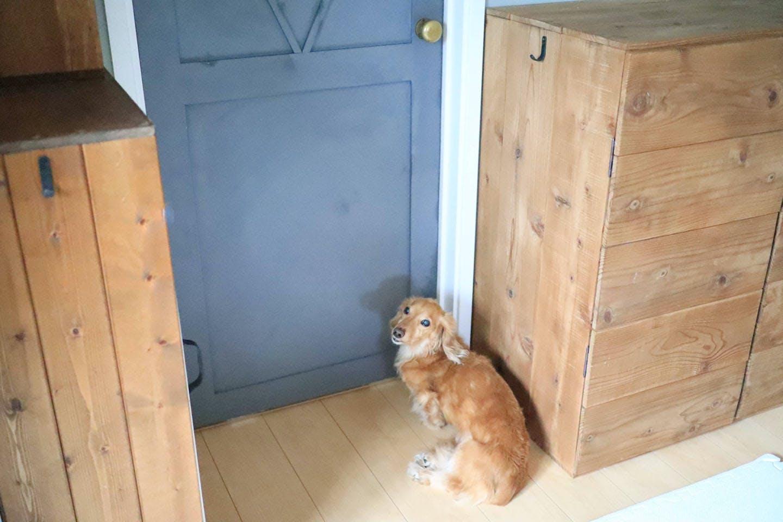 【簡単3STEP!】ペット用にドアをDIY!愛犬が自分で開けられるようにする方法《わんこと暮らすアイディア》