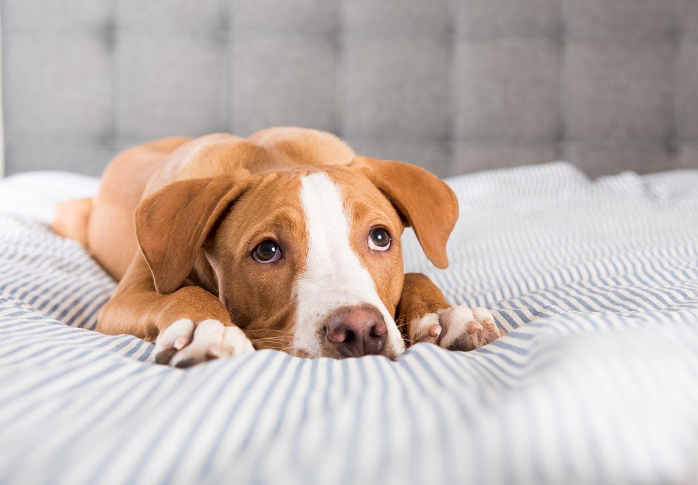 【獣医師監修】犬の心臓病の初期症状とは?早期発見のポイントや治療法、日常生活でのケアについて解説