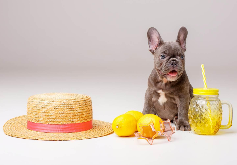 犬にレモンをあげても大丈夫?_犬とレモン