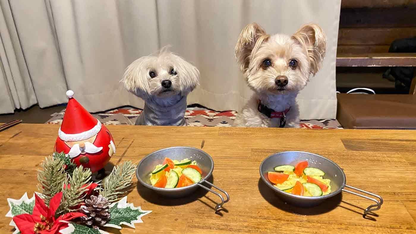 愛犬とクリスマスキャンプ 残り物ご飯