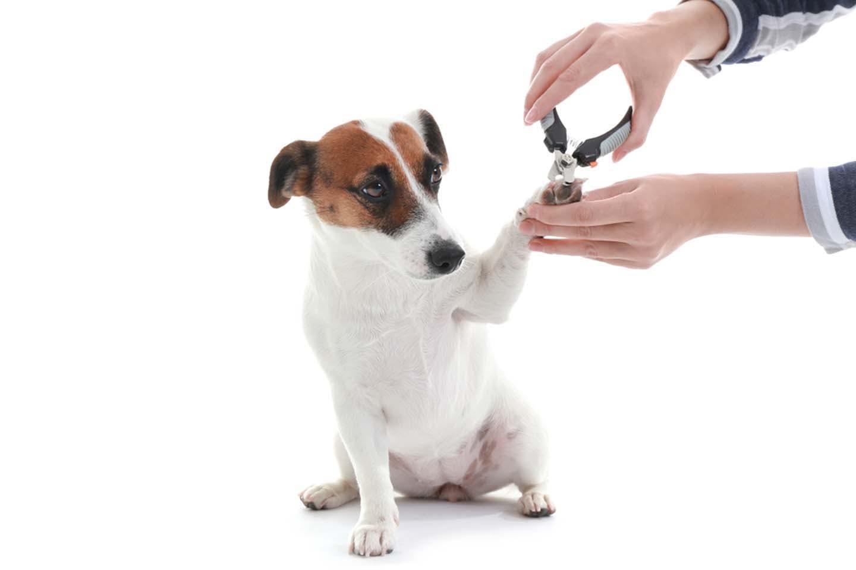 【獣医師監修】犬の爪切りのコツとは?怖がらせない方法や正しい手順、切る頻度やタイミングなどについて解説