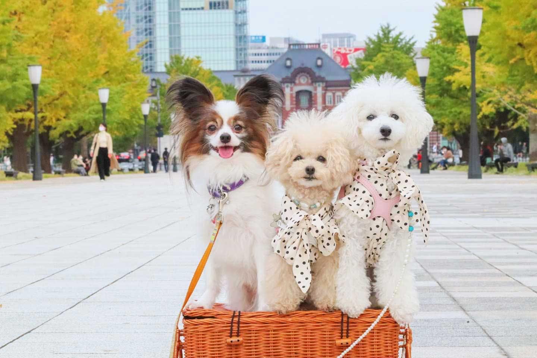 【丸の内・日比谷】愛犬と電車でお出かけ♪お散歩・ランチ・イルミネーションを楽しもう!